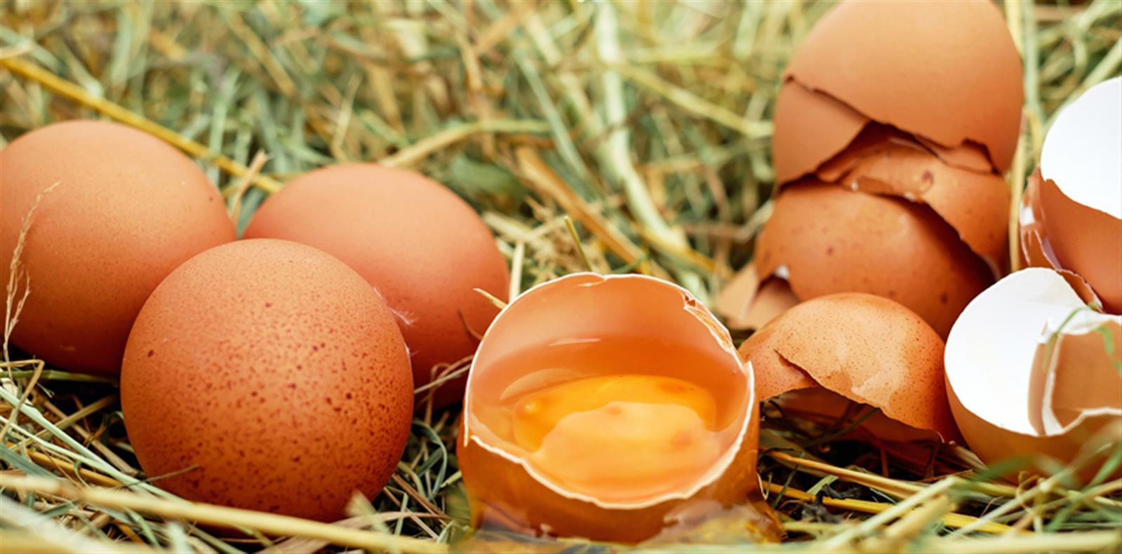 Blog uova