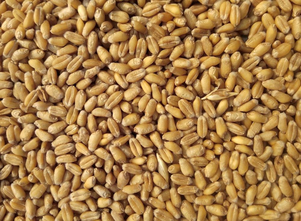 chicchi di grano
