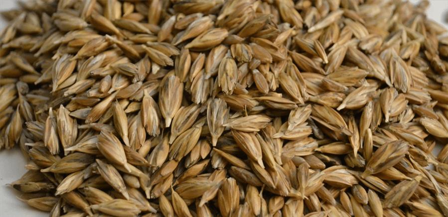 farro-contiene-glutine