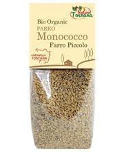 farro-monococco-coltivato-in-toscana-67606