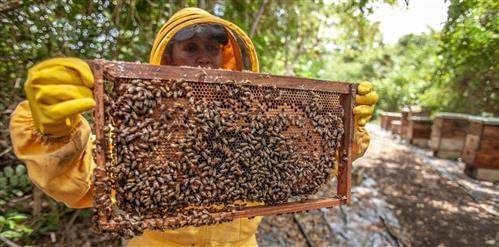 miele-biologico-italiano